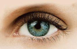 Aufbau des menschlichen Auges